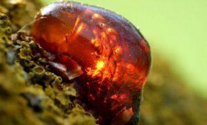Происхождение янтаря и его месторождения